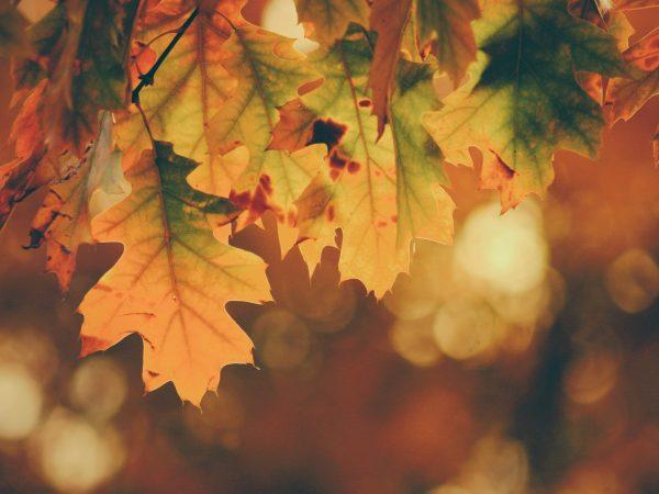 atelier nature automne
